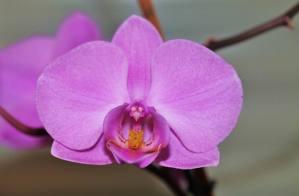 Orchidee I (3)