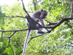 Shangri-La's Nature Reserve - Macaque chill and eat