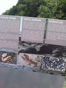 Pulau Ubin Chek Jawa Mangrove Living Things