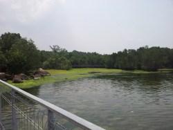 Overview of Pulau Ubin Chek Jawa Mangrove