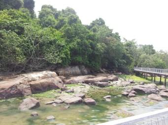 Overview of Pulau Ubin Chek Jawa Mangrove Right Side