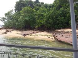 Overview of Pulau Ubin Chek Jawa Mangrove Right Side 2