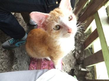 Kitten at Lokan Bakar