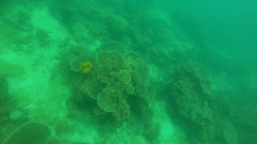 DSD at TARP, Sabah with Diverse Borneo Corals Poor Visibility due to rain
