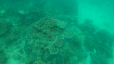 DSD at TARP, Sabah with Diverse Borneo Corals and Fishes Poor Visibility due to rain