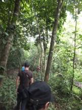 Getting Further In during Morning Jungle Trekking in Kampung Sukau Forest near Sukau Evergreen Lodge Kinabatangan