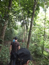 Getting Further In during Morning Jungle Trekking in Kampung Sukau Forest near Sukau Evergreen Lodge Kinabatangan