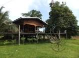 2D1N Wildlife Nature Local Village while Walking Back to Sukau Evergreen Lodge Kinabatangan