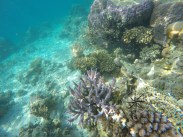 Small fishes around corals and reefs while Snorkeling around Sibuan Island, Semporna Island Hopping