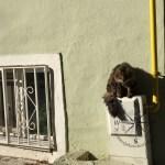 Explore Canakkale, Turkey – Street Kedi aka Street Cats