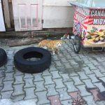 Explore Canakkale, Turkey – Street Kedi aka Street Cats Staring