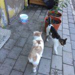 Explore Canakkale, Turkey – Street Kedi aka Street Cats Loitering