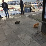 Explore Canakkale, Turkey – Canakkale Cats Patiently Sitting Around and eyeing the fisherman's catch of the day