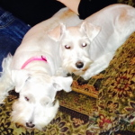 Queenie - Adopted 2