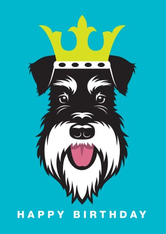 Black and Silver schnauzer wearing a crown on a blue background