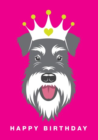 Salt and Pepper schnauzer wearing a crown on a pink background