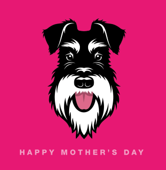 mother's day card pink silver and black schnauzer