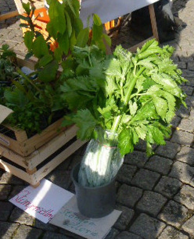 Wochenmarkt in Jena - 1.11.14   (10)