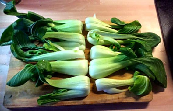 8.1.16 - Kartoffelgratin,Pak Choi,Endiviensalat,vegetarisch (10)