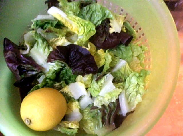Champignon,Mais,Salat,Kartoffel (5)