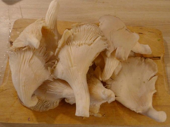 Austernpilz Risotto,Chamignon,Käse Cräcker,Salat,Quitten (10)