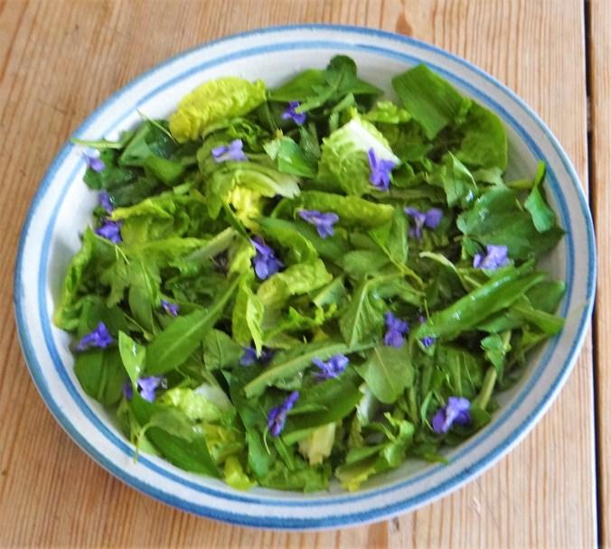 Rotbarsch,Kartoffelspalten,Salat (6)