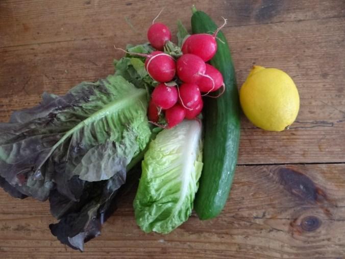 Chicoree mit Birnen,Hirse,Bunter Salat,Erdbeeren (7)