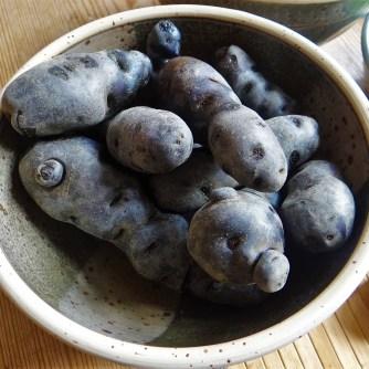 Lila Kartoffel,Guacamole,Salate (8)