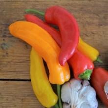 Paprika,Fenchel,Guacamole (7)