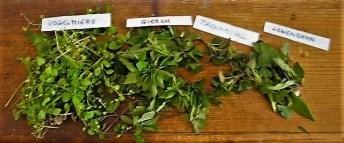 Linguine mit Wildkräuterpesto,Pimientos (5)