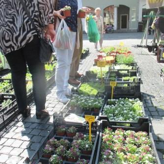 Weimarer Blumenmarkt 19.05 (11)