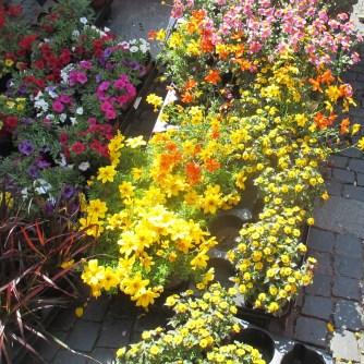 Weimarer Blumenmarkt 19.05 (20)