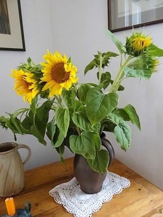 Sonnenblumen 5.8.19