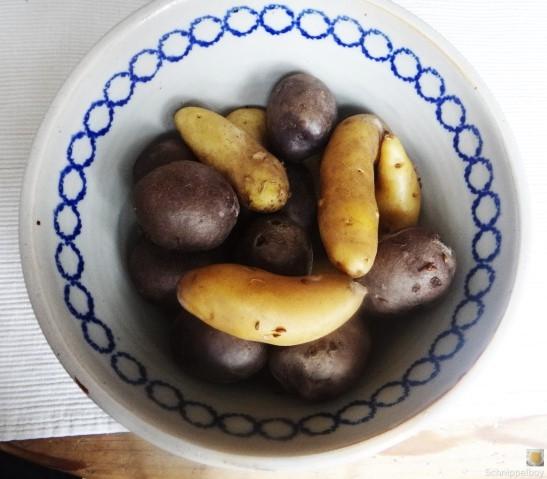 Handgemachter Quark mit Kartoffeln (5)