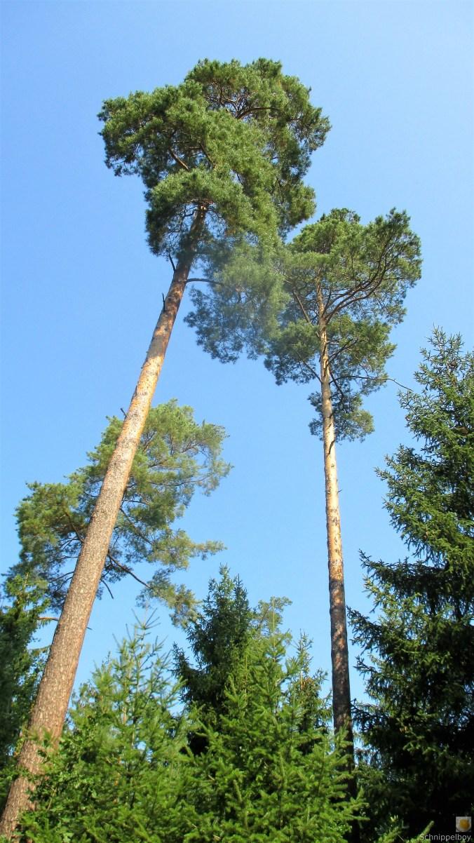 Im Wald -August 2019 (2)