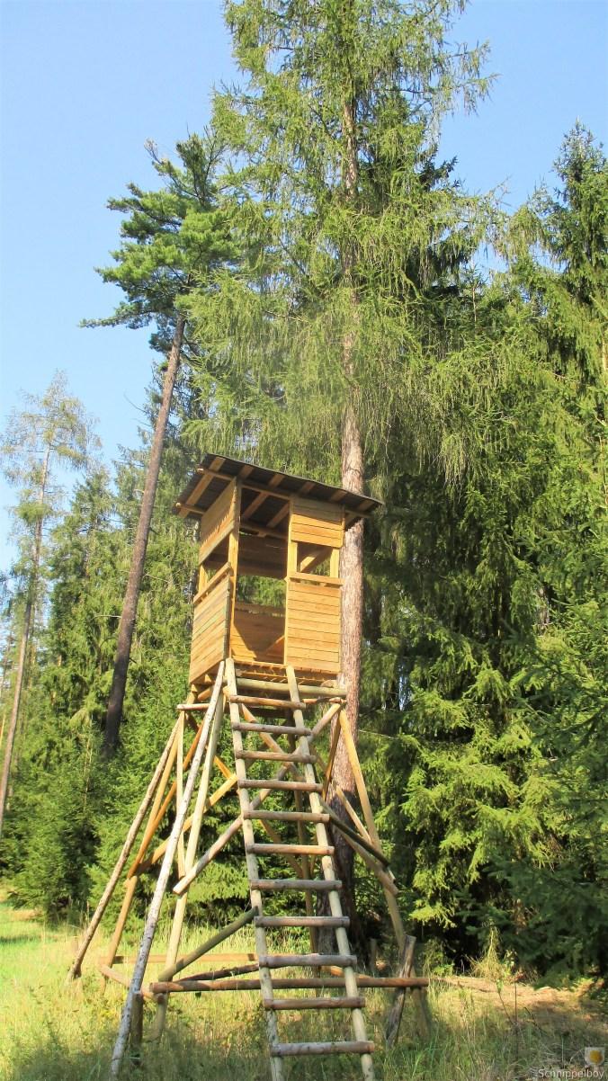 Im Wald -August 2019 (4)