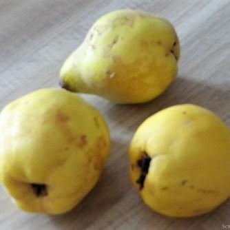 Maishähnchen mit Quitten (13)