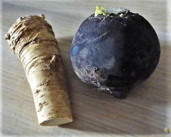 Kartoffel-Rote Bete Brei,Forelle,Makrele,Meerrettich Dip, Salate (7)