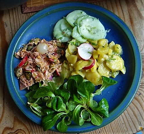 Kartoffel-Thunfisch-Feld- Gurkensalat (14)