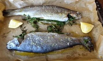 Forelle, Salate und Dip (16)