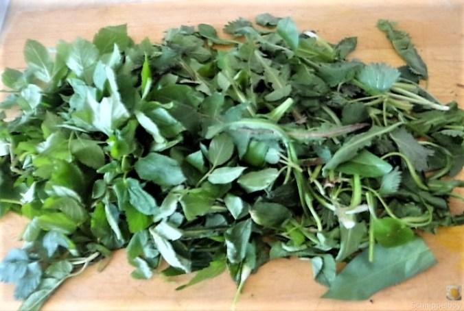 Grüne Sauce mit Wildkräutern (7)