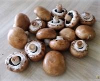 Pilze und Tomaten (11)