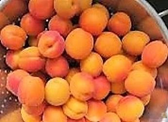 Aprikosenkuchen (4)