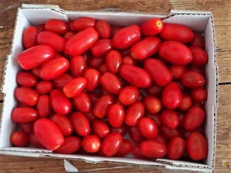 Omelett mit geschmorten Tomaten (9)