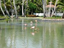 Pink birdies!