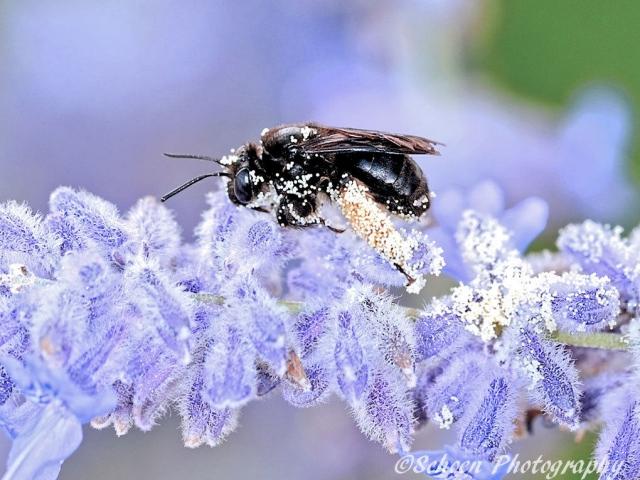Bee 002