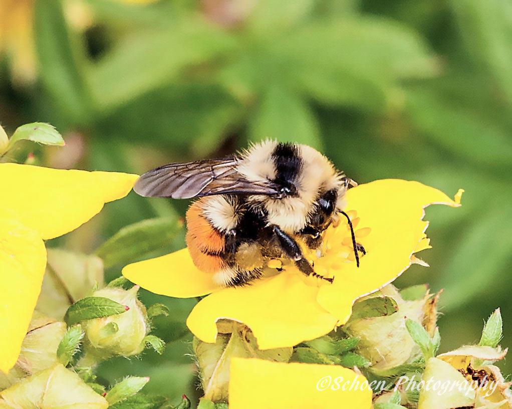 Bee 005
