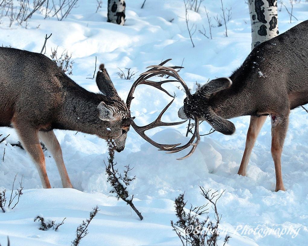 Deer 013