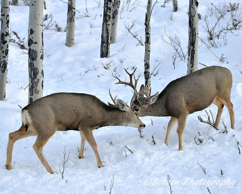 Deer 014
