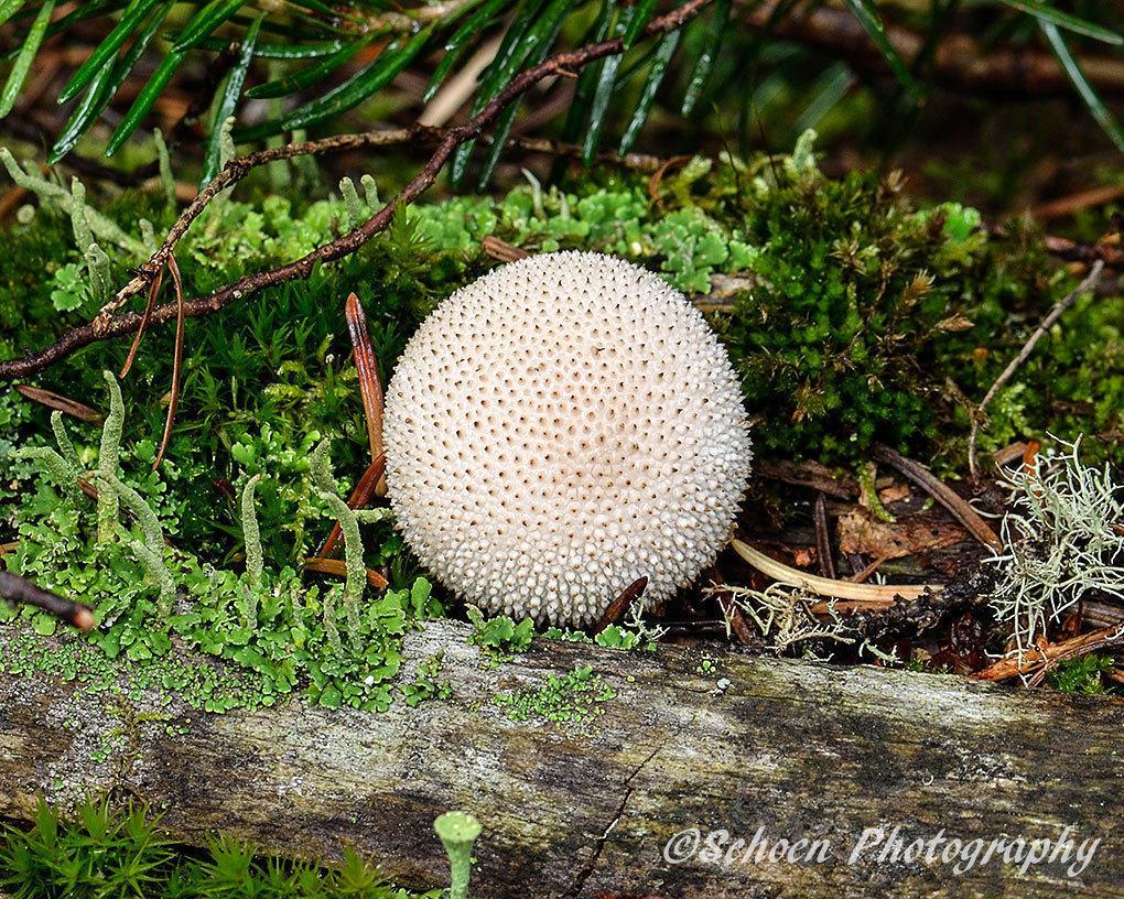 Mushroom 004